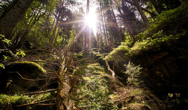 Frühling im Nationalpark Bayerischer Wald