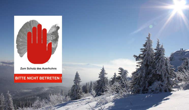 Neue Infotafel zum Auerwildschutzgebiet