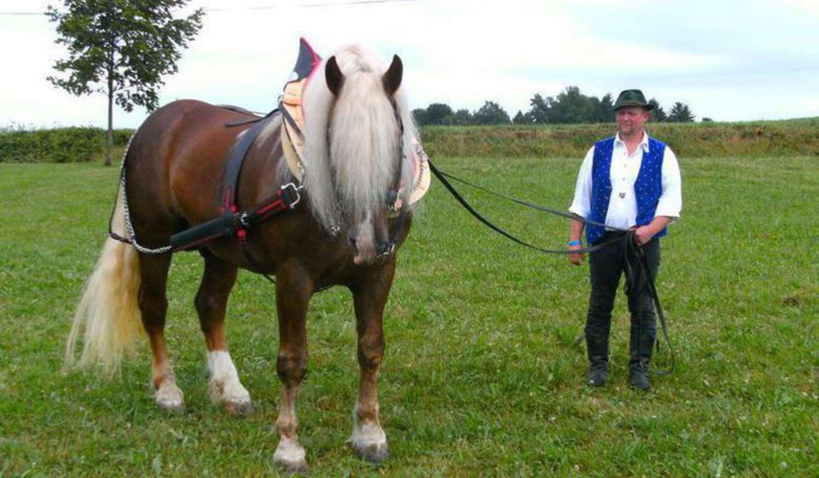 Alles F 252 R Pferd Und Reiter
