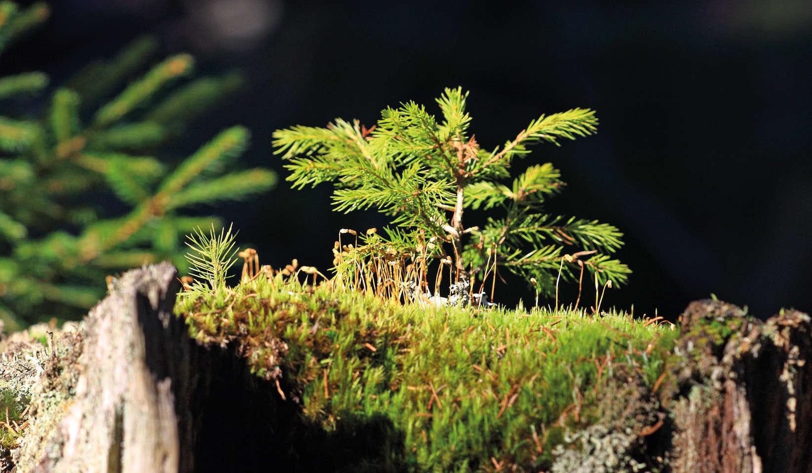 Arberland Bayerischer Wald De Erfahrungen Und Bewertungen